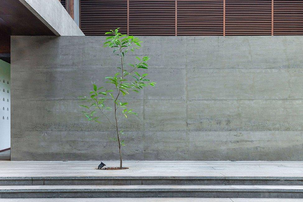 Lightness of Being : Tree